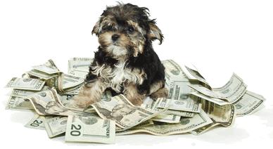 Le prix d achat d un chien varie selon sa race mais au for Combien coute un raccordement au gaz de ville
