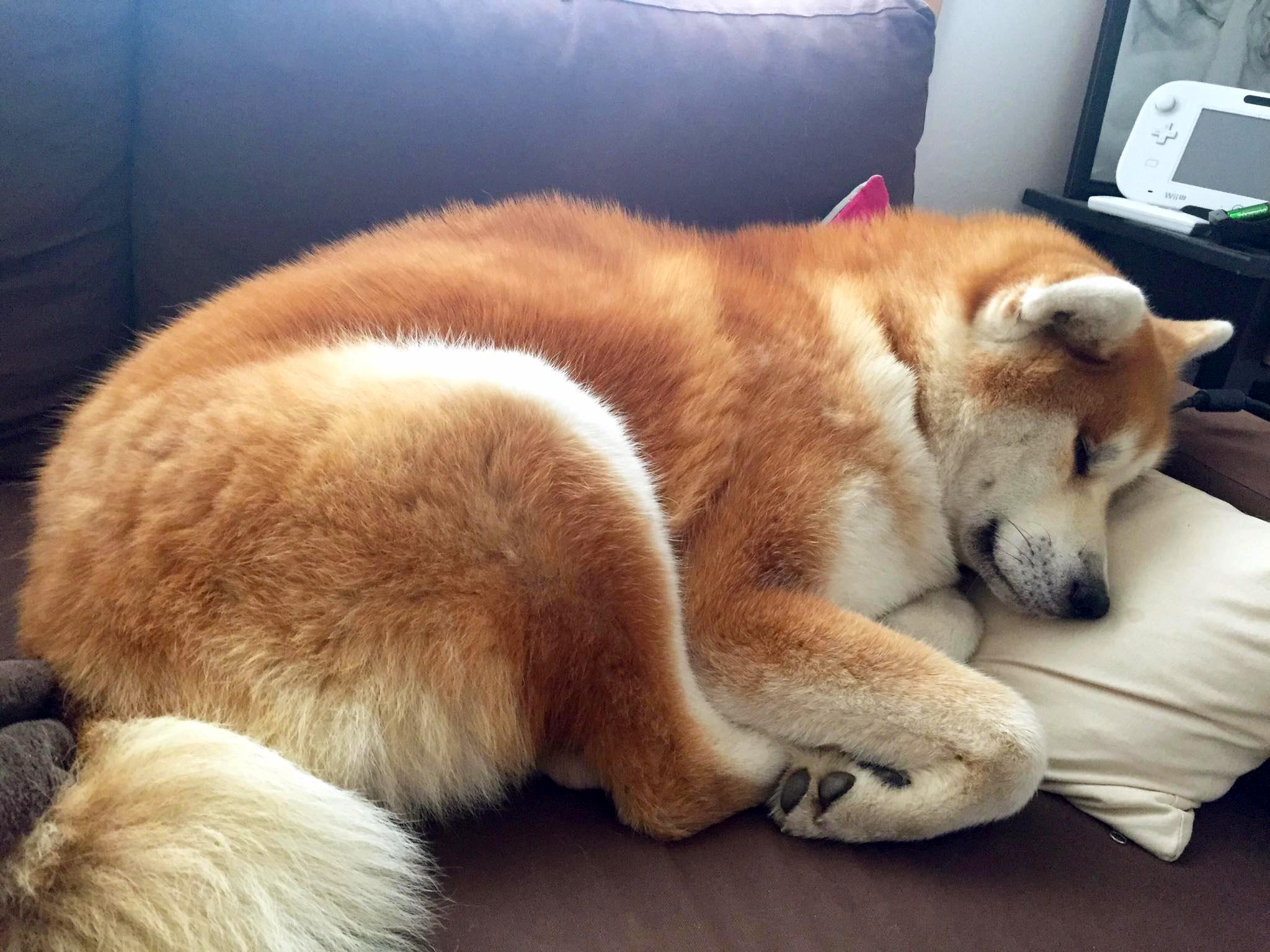 7 conseils pour bien vivre en appartement avec son chien chien calme