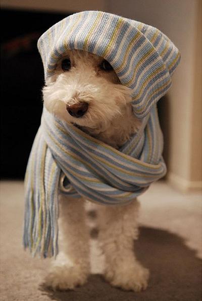 prot ger son chien contre le froid une necessit pour son confort et sa sant chien calme. Black Bedroom Furniture Sets. Home Design Ideas