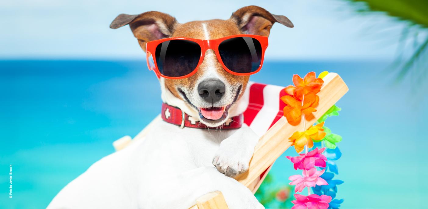 Bruit Griffe Chien Parquet 7 conseils pour bien vivre en appartement avec son chien